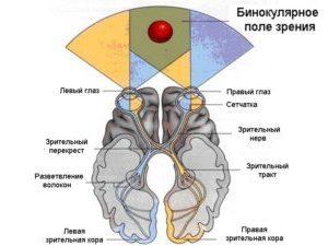 Диагностика бинокулярного зрения